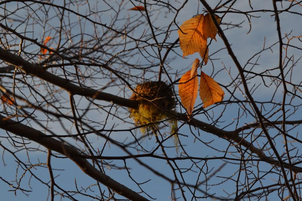 Nest awaiting spring